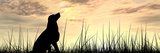 Concept or Conceptual Young Beautiful Black Cute Dog Silhouette in Grass or Meadow over a Sky at Su Photographic Print by  bestdesign36