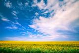 Sunflower with Blue Sky and Beautiful Sun / Sunflower Photographic Print by Ruslan Ivantsov