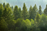Forrest of Green Pine Trees on Mountainside with Rain Photographic Print by  eric1513