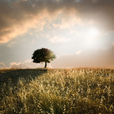 Solitary Oak Tree in the Sunset Fotografie-Druck von  ollirg
