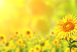 Bright Yellow Sunflowers and Sun Fotoprint av  frenta
