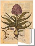 Vintage Hyacinth Wood Print by  Fab Funky