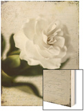Gardenia Grunge II Wood Print by Honey Malek