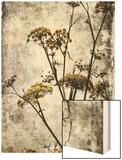 Big Sur Yarrow II Wood Print by Honey Malek