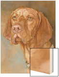 Bennett Vizsla Wood Print by Edie Fagan