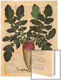 Turnip Wood Print by  Fab Funky