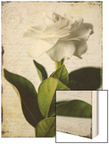 Gardenia Grunge I Wood Print by Honey Malek