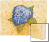 Hydrangea Love II Wood Print by Wendy Russell