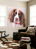 Georgia Springer Spaniel Wall Mural by Edie Fagan