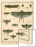 Histoire Naturelle Insects II Wood Print by  Diderot