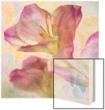 Pink Hyacinth I Wood Print by Honey Malek