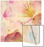 Pink Hyacinth V Wood Print by Honey Malek