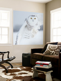 Owl in Flight I Wall Mural by  PHBurchett