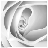Rose Swirl I Prints