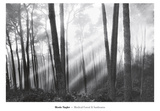 Mystical Forest & Sunbeams Prints by Monte Nagler