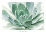 Zen Print by Dina Marie