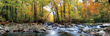 Porters Creek Print by D. Burt