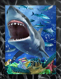 Shark Tank 3D Framed Art Posters