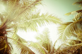 Abstract Summer Background with Tropical Palm Tree Leaves Photographic Print by Perfect Lazybones