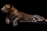 Jaguar Photographic Print by yulius handoko