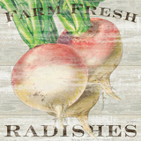 Farm Fresh Radishes Posters by Sue Schlabach