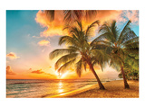 Golden Barbados Beach Sunset Posters