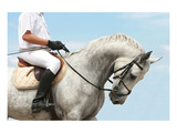 Jockey Riding Dressage Horse Prints
