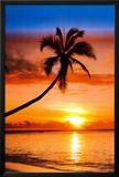 Sunset Palm Posters