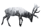 Forest - Deer - Silhouette Photographic Print