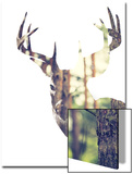Whitetail Buck in the forest or Vice Versa Kunstdrucke