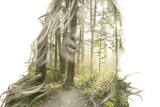 Her Name was Sunshine & I saw her through the Forest Trees Photographic Print