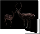 Deer, Dear Posters