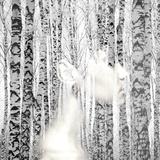 Birch Calm Photographic Print