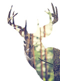 Whitetail Buck in the forest or Vice Versa Fotografisk tryk