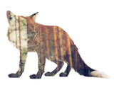 Red Fox in the Forest or Vice Versa Plastic Sign