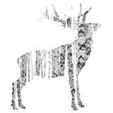 Birch - Buck - Silhouette Photographic Print