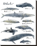 A Collection of Whales Stampa su tela di Ken Hurd