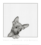 Sweet Chihuahua Art by Jon Bertelli