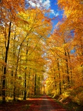 Vägen till hösten Konst på metall av Philippe Sainte-Laudy