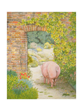 The Convent Garden Pig Giclee Print by  Ditz