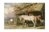 Mares and Foals, 19th Century Giclee Print by William Barraud