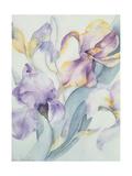 Iris Mixed, Ola Kale and Mary Todd Giclee Print by Karen Armitage