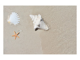 Sandy Beach Conch & Starfish Prints