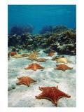 Starfish Near a Coral Reef Print