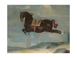The Black Horse 'Curioso' Performing a Capriole Giclee Print by Johann Georg Hamilton