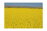 Rape Field, 2003 Giclee Print by Alan Byrne