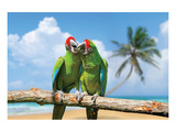 Severe Macaw Parrots on Beach Pósters