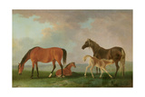 Mares and Foals Giclee Print by Sawrey Gilpin