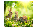Rabbits Sunny Flower Meadow Prints