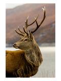 Stag Antlers Scot Glen Garry Prints